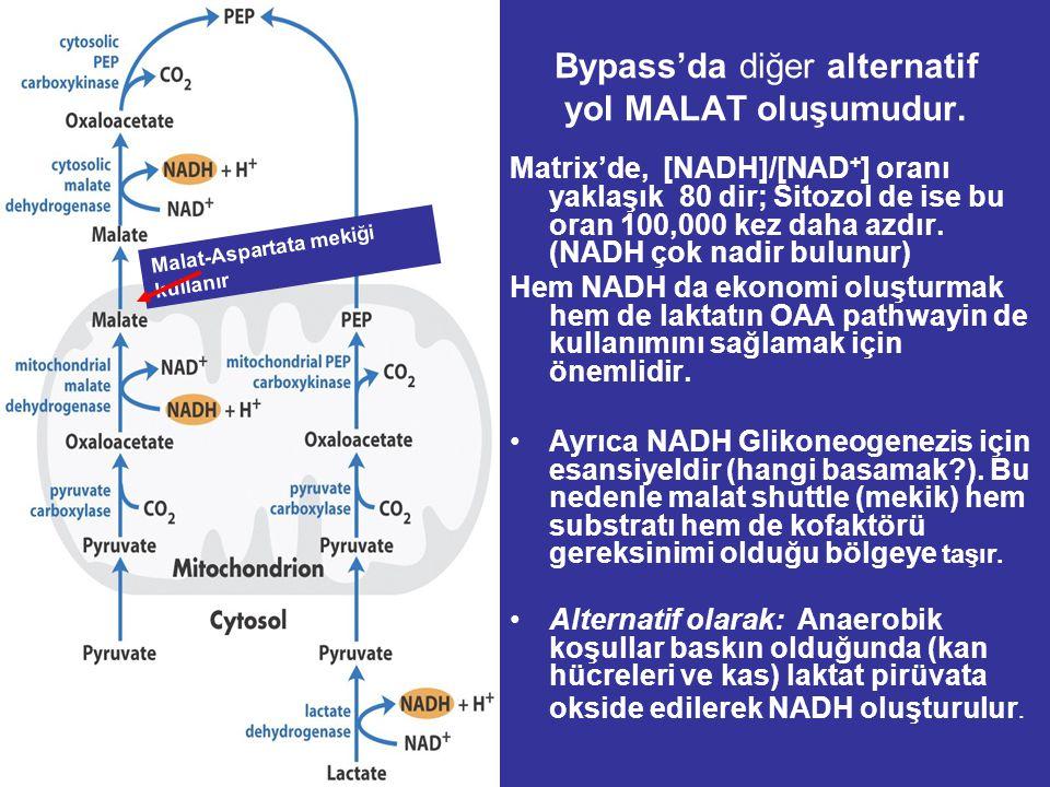 İlk Bypass İçin Yüksek enerjili İki Fosfat bağı harcanır. Privat'ın sitozolik derişimi laktat ve alanin aracılığı ile arttığında OAA oluşumu için mito