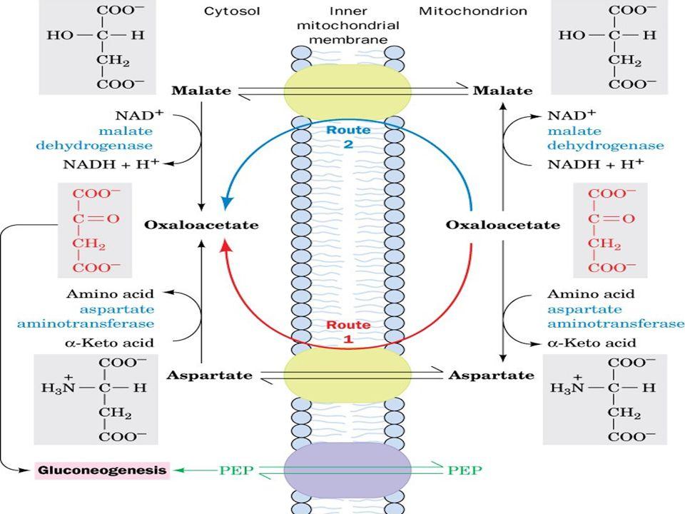 Matrix'de, [NADH]/[NAD + ] oranı yaklaşık 80 dir; Sitozol de ise bu oran 100,000 kez daha azdır. (NADH çok nadir bulunur) Hem NADH da ekonomi oluşturm