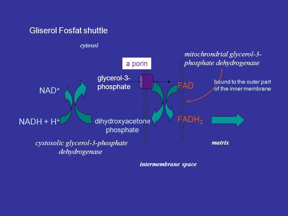 Malate-aspartate shuttle  -ketoglutarate- malate carrier oxaloacetate malate oxaloacetate mitochondrial matrixcytosol aspartate- glutamate carrier as