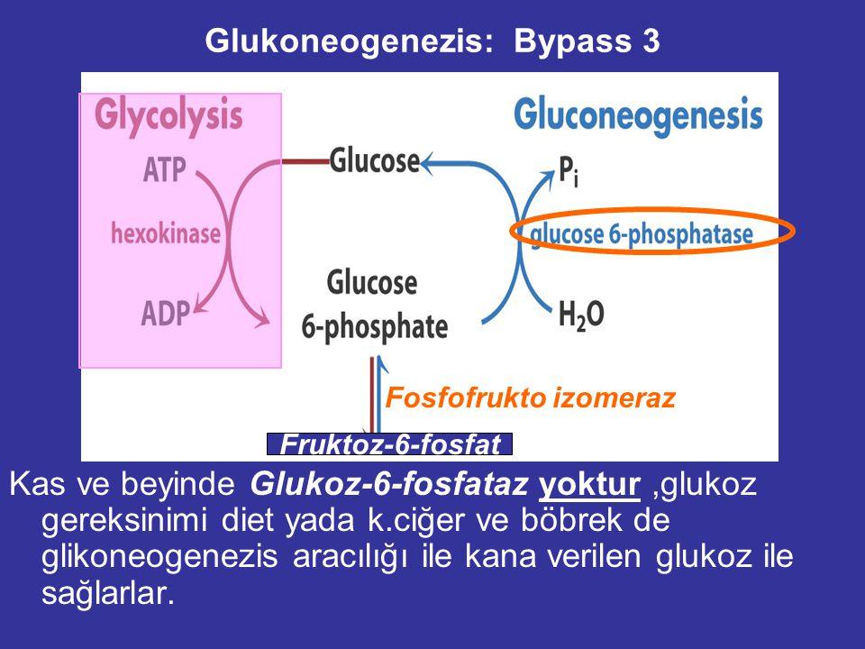 Glukoneogenezis: Bypass 2 - C-1 fosfat grubu fruktoz 1,6-bisfosfataz tarafından hidroliz edilir. -Karaciğer de  G: -8.6 kJ/mol -- Allosterik regulati