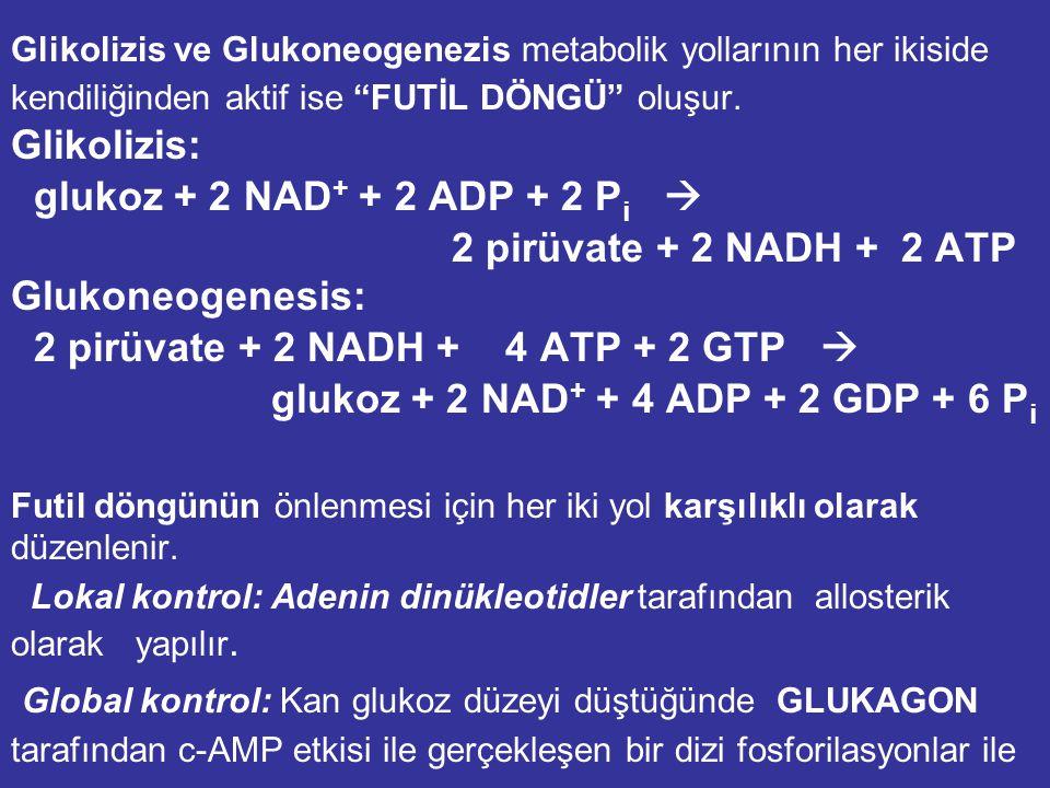 GLUKONEOGENEZ'İN DÜZENLENMESİ: Glukoneogenez ve Glikoliz karşılıklı olarak düzenlenir. Düzenlenme Enerji gereksinimine bağlı olarak Hormonal ve Allost