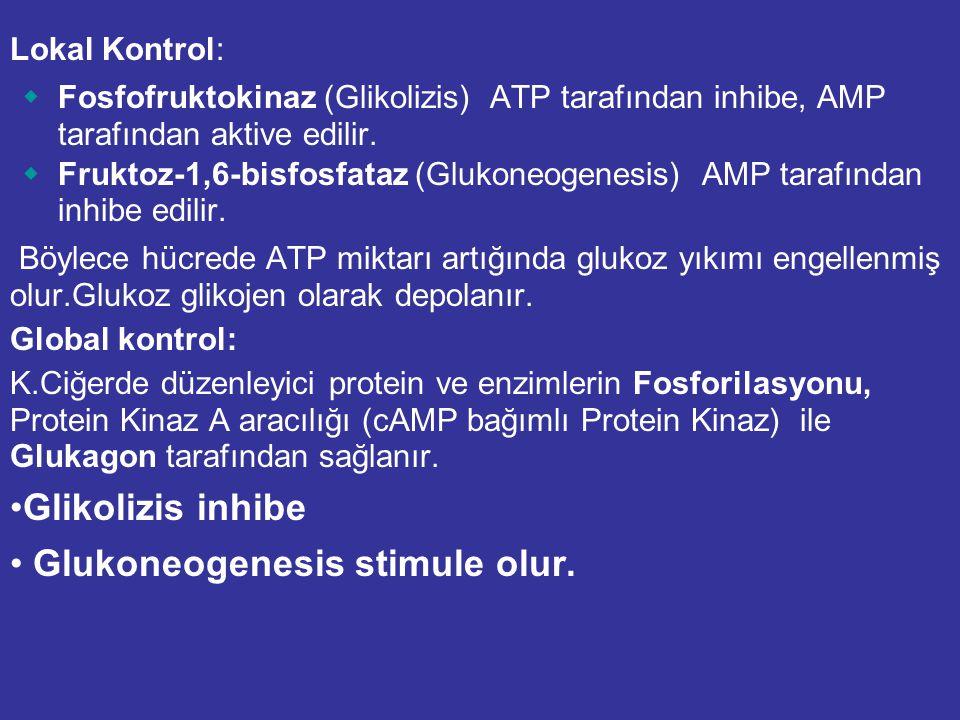 """Glikolizis ve Glukoneogenezis metabolik yollarının her ikiside kendiliğinden aktif ise """"FUTİL DÖNGÜ"""" oluşur. Glikolizis: glukoz + 2 NAD + + 2 ADP + 2"""