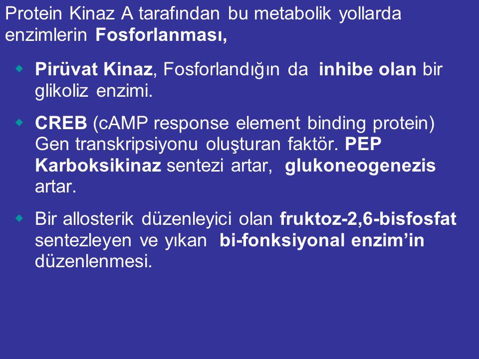 Lokal Kontrol:  Fosfofruktokinaz (Glikolizis) ATP tarafından inhibe, AMP tarafından aktive edilir.  Fruktoz-1,6-bisfosfataz (Glukoneogenesis) AMP ta