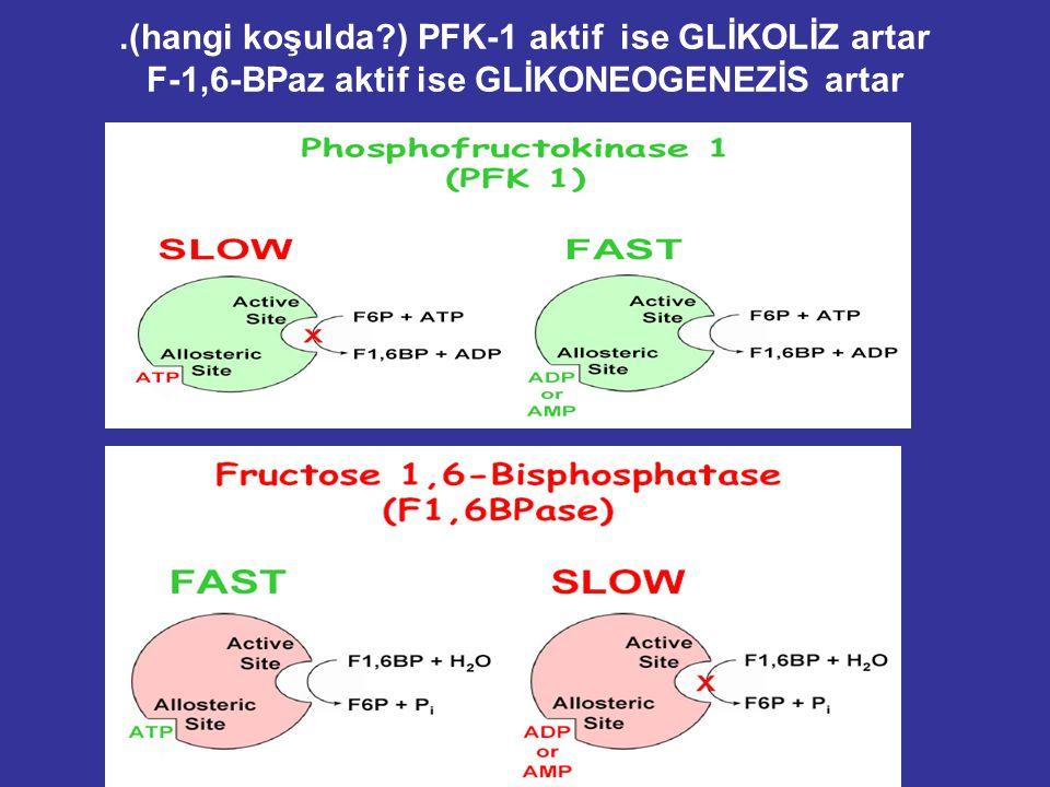 Karaciğerde Hormonal kontrol: Glikoneogenez ve Glikoliz enzimlerinin düzenlenmesi başlıca fosforilasyon/ defosforilasyon mekanizması ile sağlanır. Bud