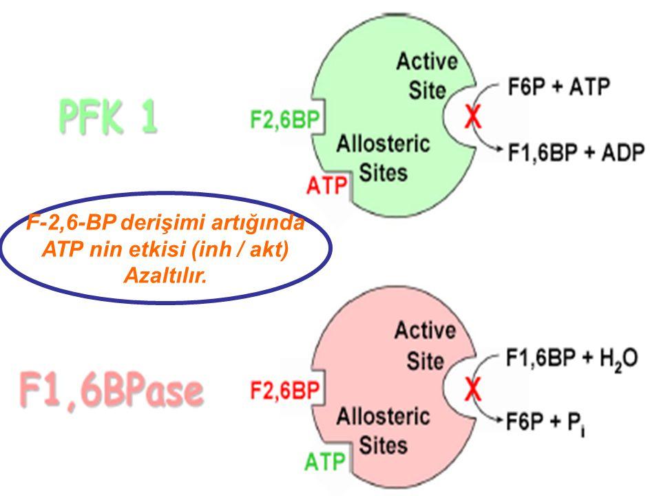 . Fruktoz-2,6-bisfosfat'ın sentez ve yıkımı iki aktif bölgeye sahip tek bir enzim PFK 2 / F-2,6-BPaz tarafından yapılır