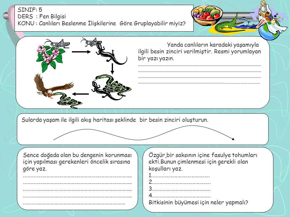 SINIF: 5 DERS : Fen Bilgisi KONU : Canlıları Beslenme İlişkilerine Göre Gruplayabilir miyiz? Sularda yaşam ile ilgili akış haritası şeklinde bir besin