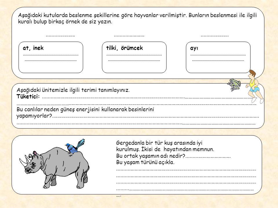 Aşağıdaki kutularda beslenme şekillerine göre hayvanlar verilmiştir. Bunların beslenmesi ile ilgili kuralı bulup birkaç örnek de siz yazın............
