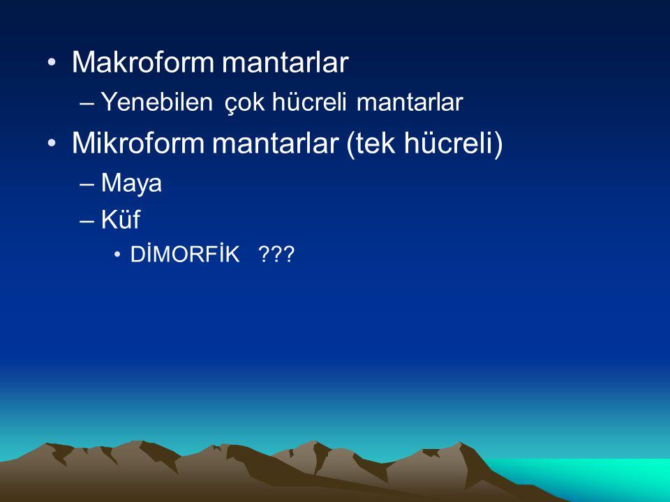Makroform mantarlar –Yenebilen çok hücreli mantarlar Mikroform mantarlar (tek hücreli) –Maya –Küf DİMORFİK ???