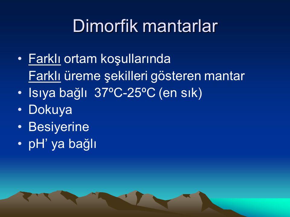 Dimorfik mantarlar Farklı ortam koşullarında Farklı üreme şekilleri gösteren mantar Isıya bağlı 37ºC-25ºC (en sık) Dokuya Besiyerine pH' ya bağlı