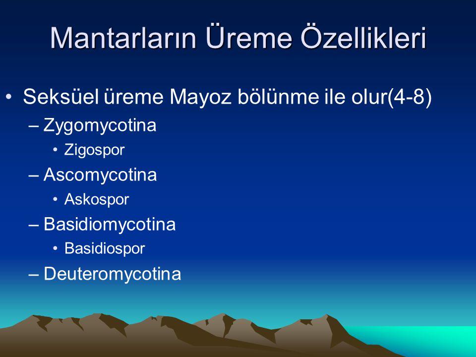 Mantarların Üreme Özellikleri Seksüel üreme Mayoz bölünme ile olur(4-8) –Zygomycotina Zigospor –Ascomycotina Askospor –Basidiomycotina Basidiospor –De