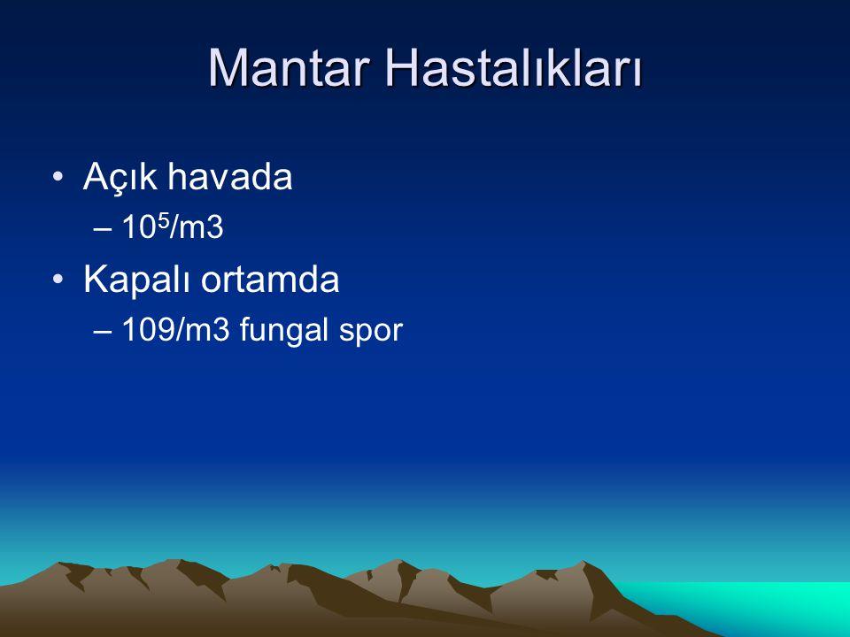 Mantar Hastalıkları Açık havada –10 5 /m3 Kapalı ortamda –109/m3 fungal spor