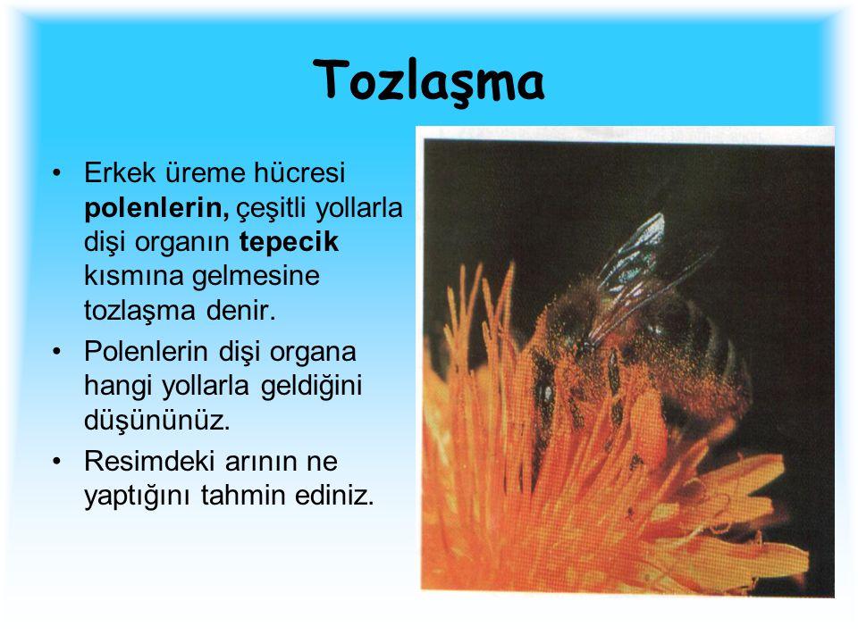 Tozlaşma Erkek üreme hücresi polenlerin, çeşitli yollarla dişi organın tepecik kısmına gelmesine tozlaşma denir. Polenlerin dişi organa hangi yollarla