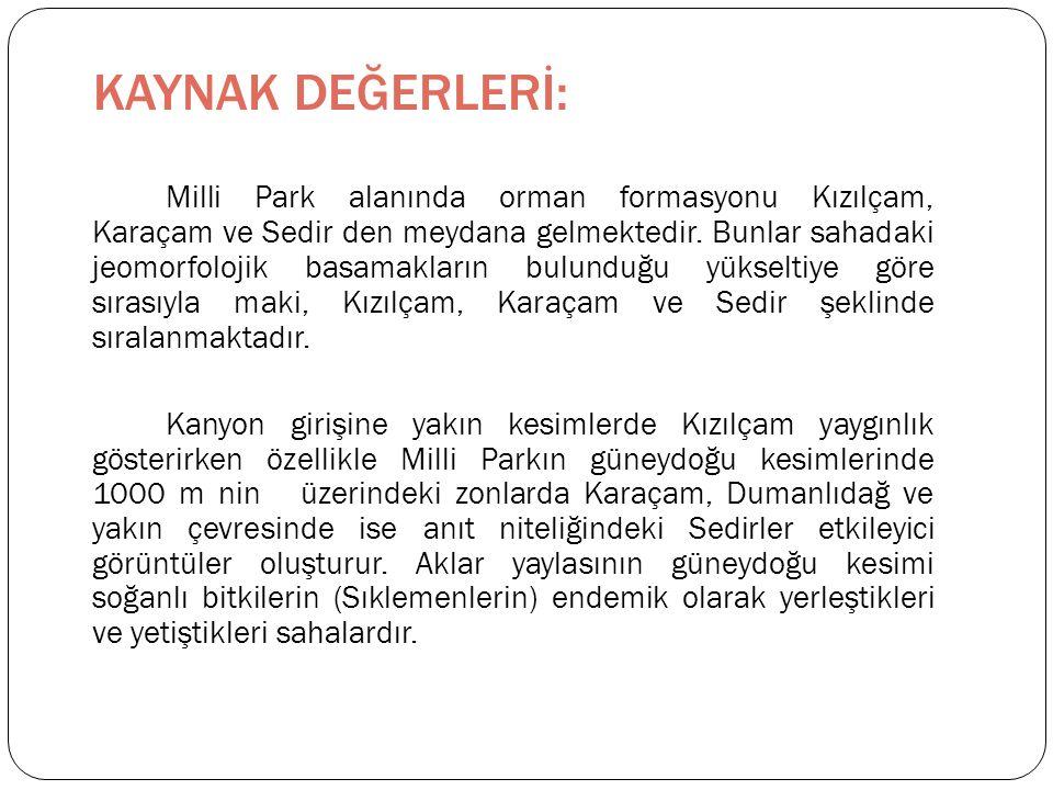 Milli Park alanında orman formasyonu Kızılçam, Karaçam ve Sedir den meydana gelmektedir.