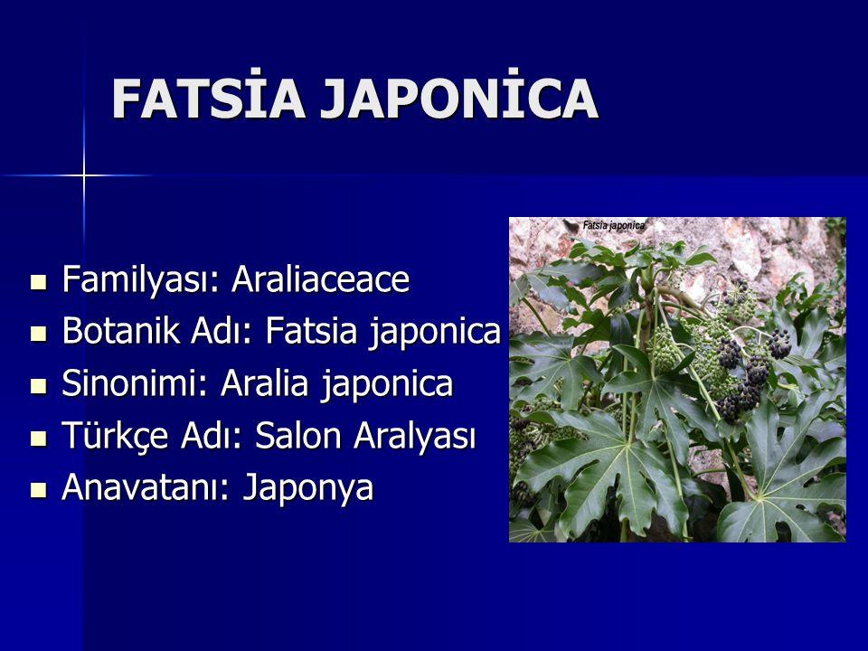 FATSİA JAPONİCA Familyası: Araliaceace Familyası: Araliaceace Botanik Adı: Fatsia japonica Botanik Adı: Fatsia japonica Sinonimi: Aralia japonica Sino
