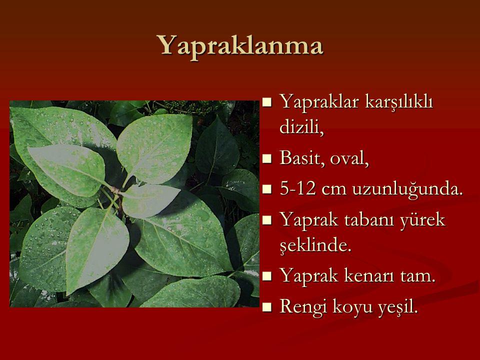 Yapraklanma Yapraklar karşılıklı dizili, Yapraklar karşılıklı dizili, Basit, oval, Basit, oval, 5-12 cm uzunluğunda. 5-12 cm uzunluğunda. Yaprak taban