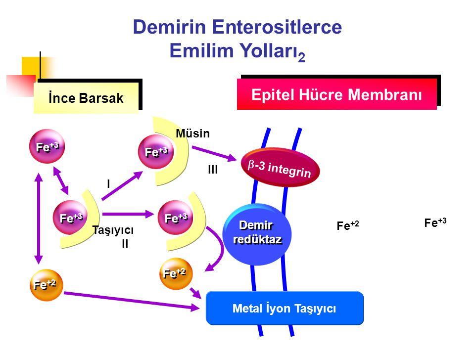 İnce Barsak Epitel Hücre Membranı Fe +3 Fe +2 Fe +3  -3 integrin Demir redüktaz Fe +3 Fe +2 III I II Metal İyon Taşıyıcı Müsin Taşıyıcı Demirin Enter
