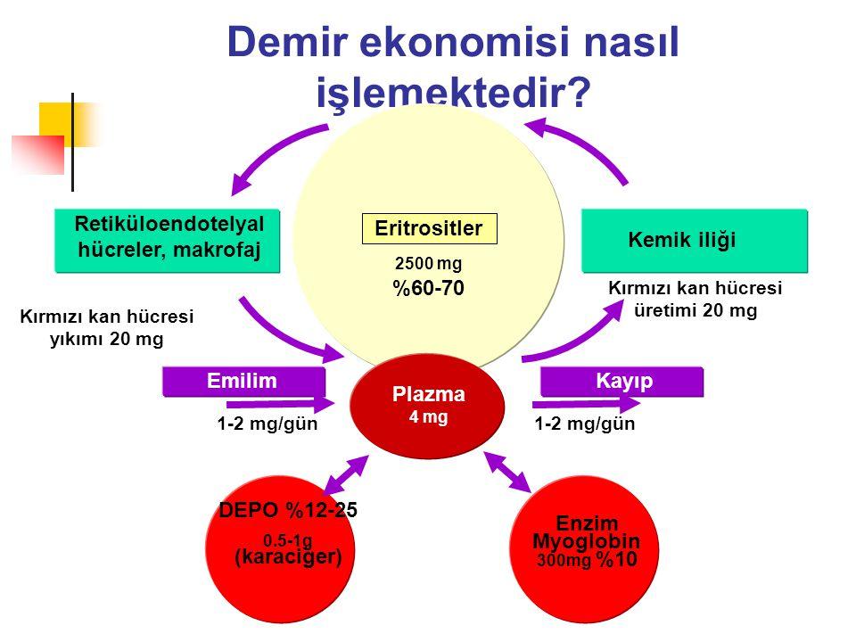 Demir ekonomisi nasıl işlemektedir? Retiküloendotelyal hücreler, makrofaj Kemik iliği EmilimKayıp 1-2 mg/gün Plazma 4 mg Eritrositler DEPO %12-25 0.5-