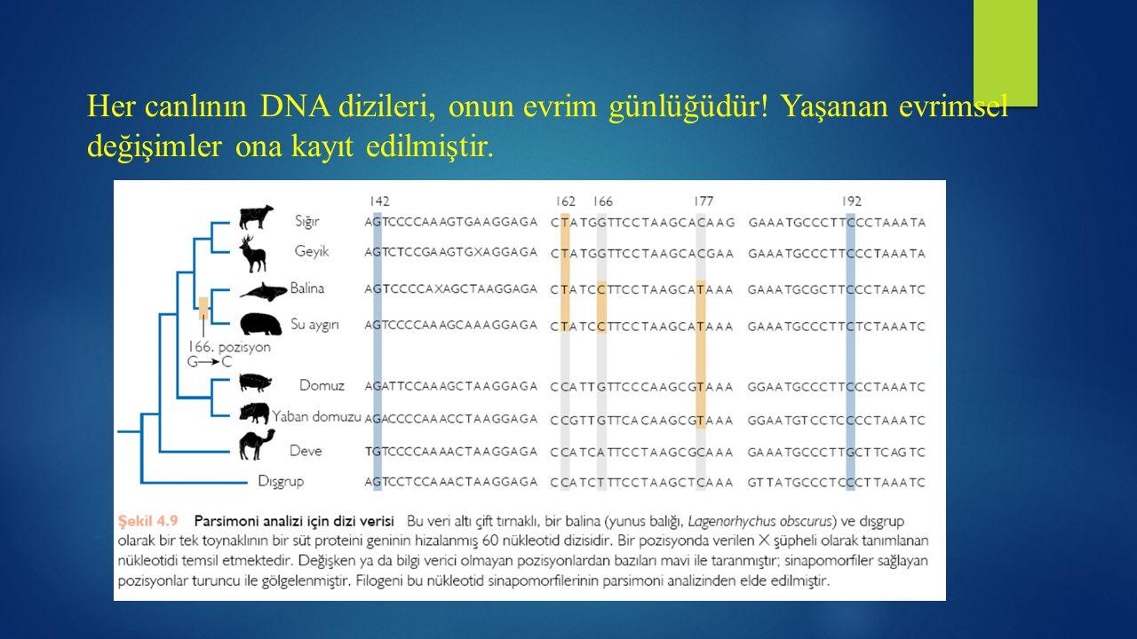 Her canlının DNA dizileri, onun evrim günlüğüdür! Yaşanan evrimsel değişimler ona kayıt edilmiştir.