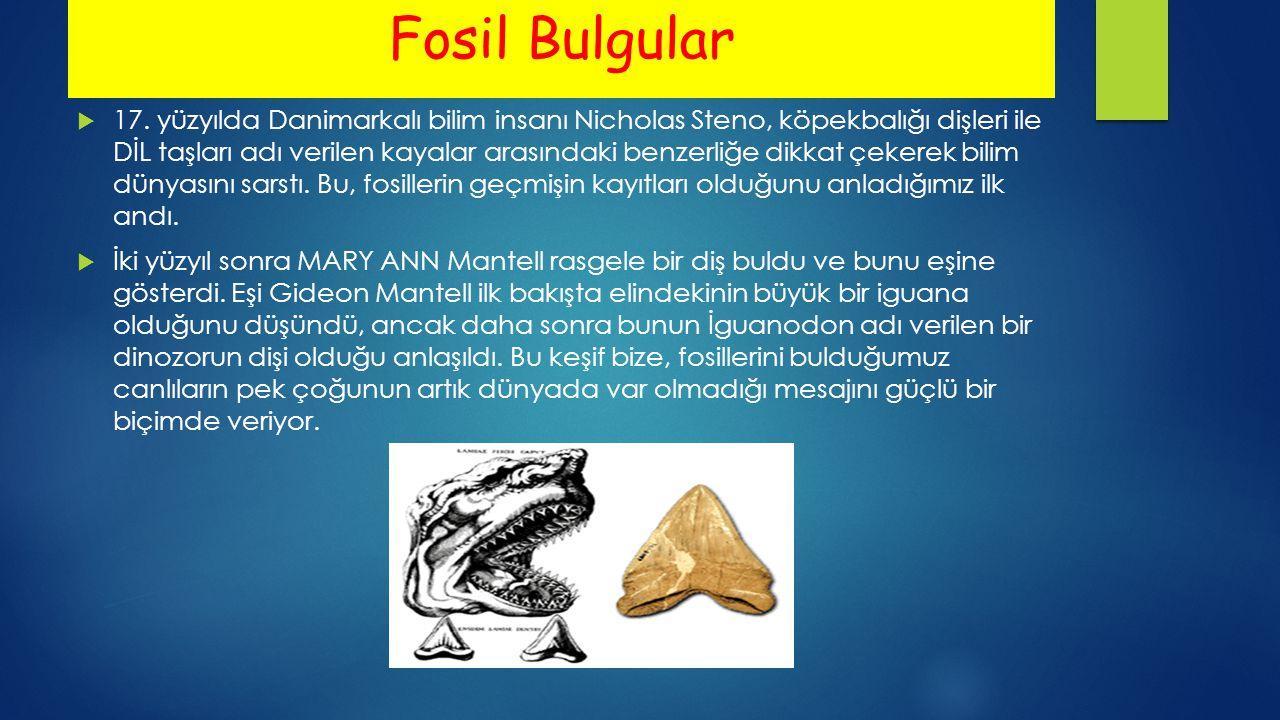 Fosil Bulgular  17. yüzyılda Danimarkalı bilim insanı Nicholas Steno, köpekbalığı dişleri ile DİL taşları adı verilen kayalar arasındaki benzerliğe d
