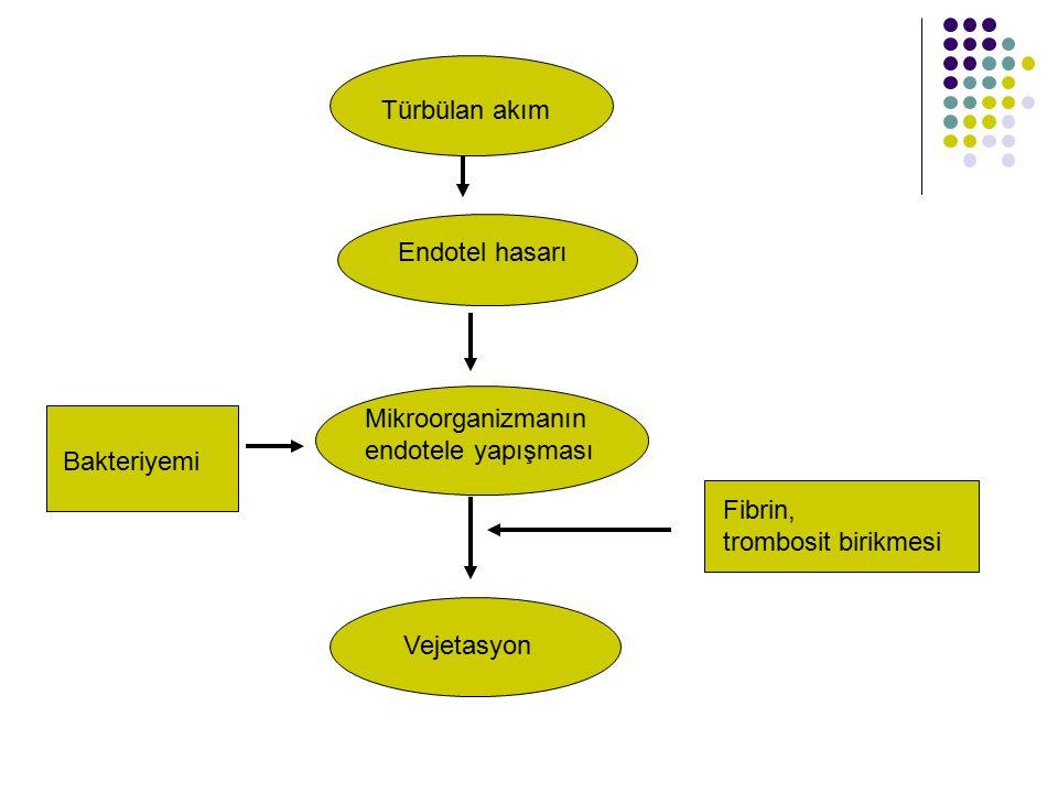 Bakteriyemi Mikroorganizmanın endotele yapışması Fibrin, trombosit birikmesi Vejetasyon Türbülan akım Endotel hasarı