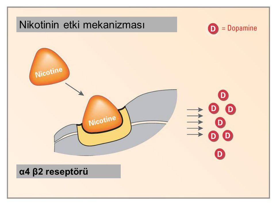 vareniklin Nikotinin etki mekanizması α4 β2 reseptörü