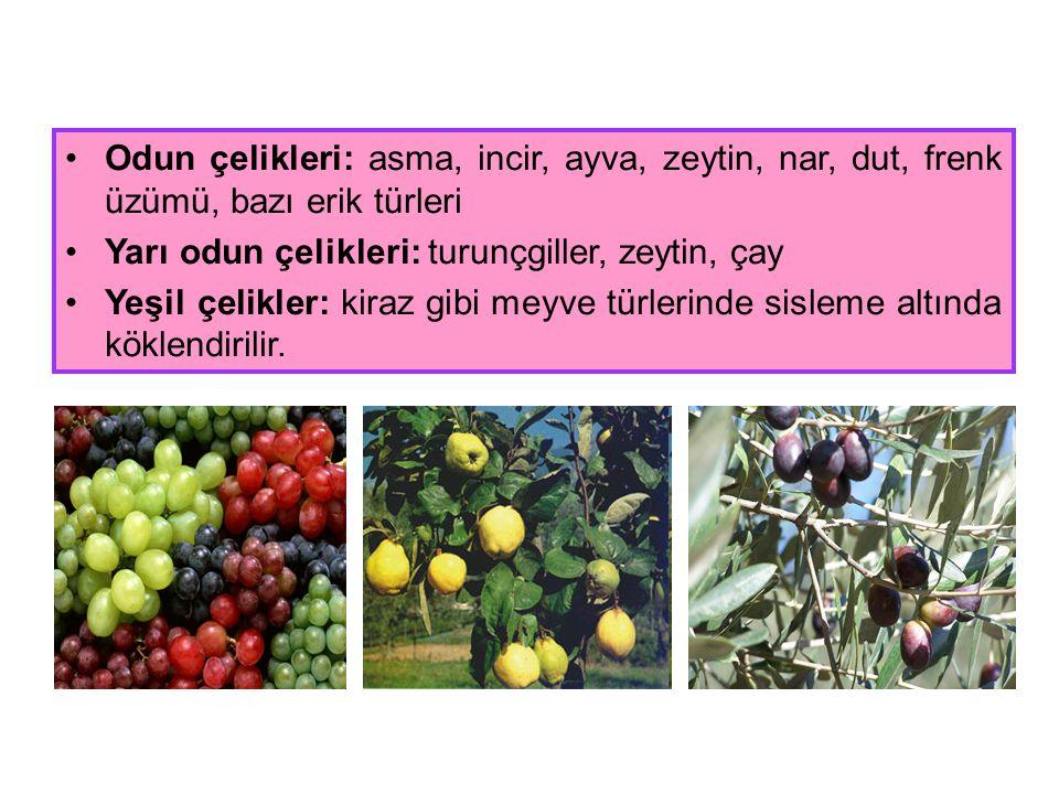 Odun çelikleri: asma, incir, ayva, zeytin, nar, dut, frenk üzümü, bazı erik türleri Yarı odun çelikleri: turunçgiller, zeytin, çay Yeşil çelikler: kir