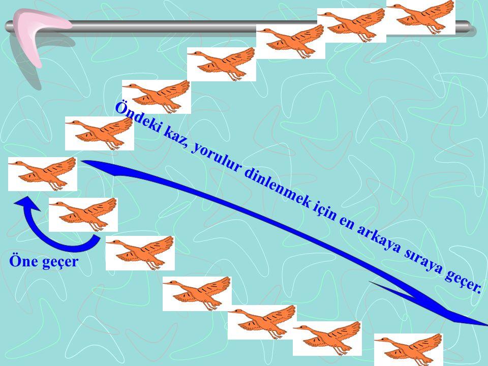 Yaban kazları, kanatlarını çırptıkça arkalarından gelen kazın yukarıya çıkmasını kolaylaştıran bir hava akımı yaratırlar. Bunun için Kıtalar arası uça