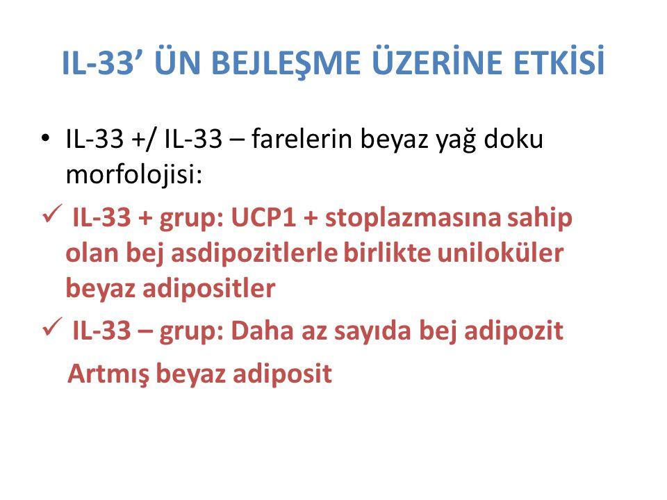 IL-33' ÜN BEJLEŞME ÜZERİNE ETKİSİ IL-33 +/ IL-33 – farelerin beyaz yağ doku morfolojisi: IL-33 + grup: UCP1 + stoplazmasına sahip olan bej asdipozitle