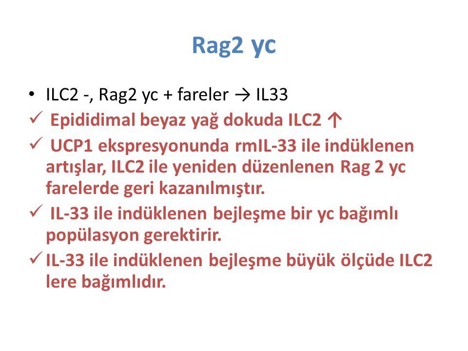 Rag2 yc ILC2 -, Rag2 yc + fareler → IL33 Epididimal beyaz yağ dokuda ILC2 ↑ UCP1 ekspresyonunda rmIL-33 ile indüklenen artışlar, ILC2 ile yeniden düze