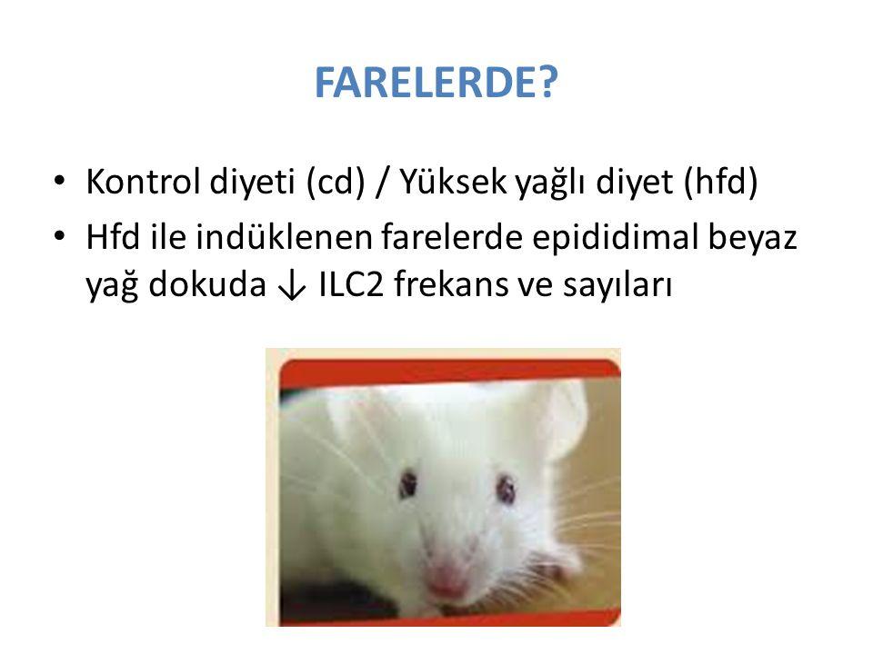 FARELERDE? Kontrol diyeti (cd) / Yüksek yağlı diyet (hfd) Hfd ile indüklenen farelerde epididimal beyaz yağ dokuda ↓ ILC2 frekans ve sayıları