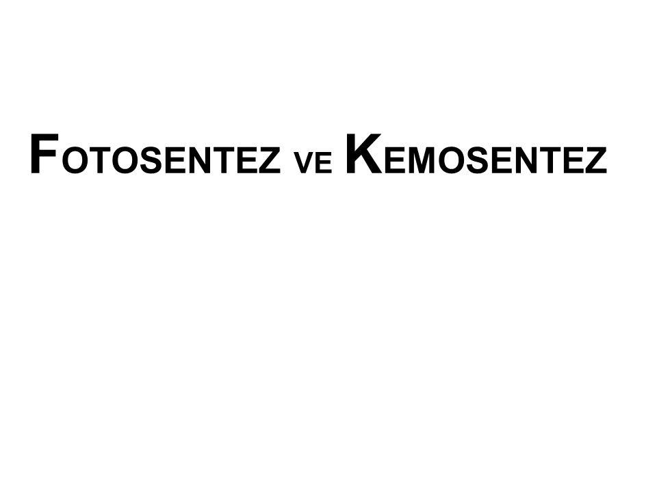 Nitrosomonas bakterisi Amonyak'ı Nitrit'e çevirir.
