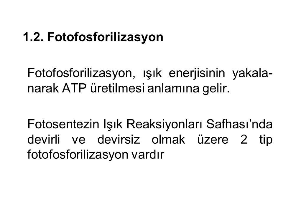 1.2. Fotofosforilizasyon Fotofosforilizasyon, ışık enerjisinin yakala- narak ATP üretilmesi anlamına gelir. Fotosentezin Işık Reaksiyonları Safhası'nd