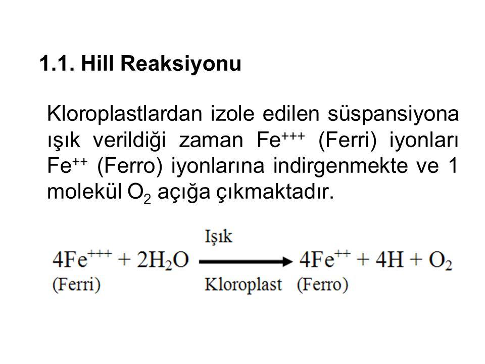1.1. Hill Reaksiyonu Kloroplastlardan izole edilen süspansiyona ışık verildiği zaman Fe +++ (Ferri) iyonları Fe ++ (Ferro) iyonlarına indirgenmekte ve