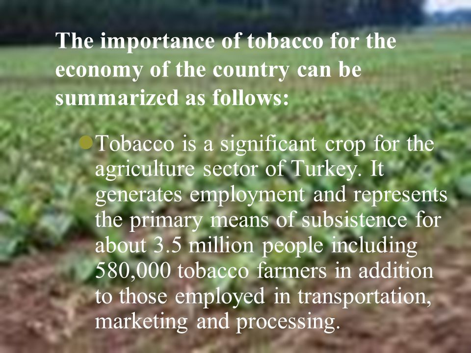The importance of tobacco for the economy of the country can be summarized as follows: Tobacco is a significant crop for the agriculture sector of Turkey.