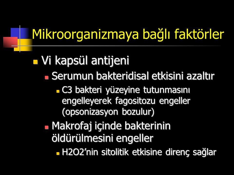 Mikroorganizmaya bağlı faktörler Vi kapsül antijeni Vi kapsül antijeni Serumun bakteridisal etkisini azaltır Serumun bakteridisal etkisini azaltır C3