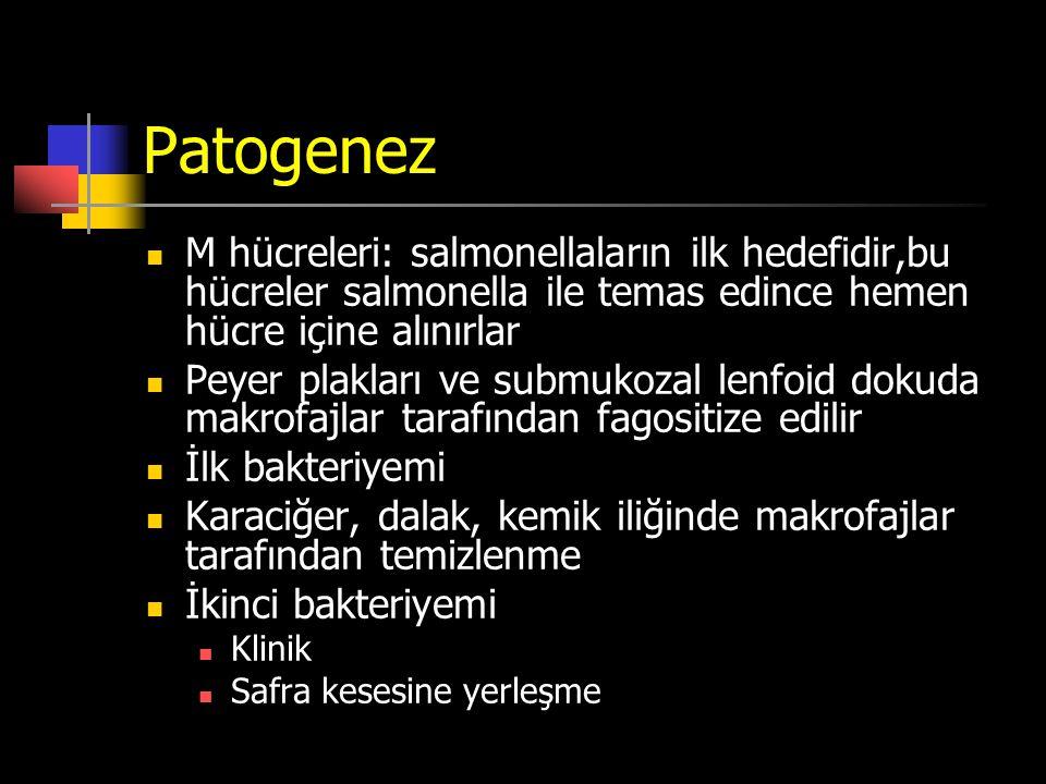 Patogenez M hücreleri: salmonellaların ilk hedefidir,bu hücreler salmonella ile temas edince hemen hücre içine alınırlar Peyer plakları ve submukozal