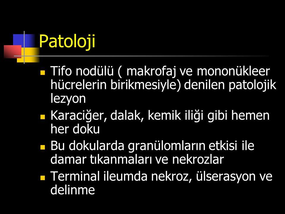 Patoloji Tifo nodülü ( makrofaj ve mononükleer hücrelerin birikmesiyle) denilen patolojik lezyon Karaciğer, dalak, kemik iliği gibi hemen her doku Bu