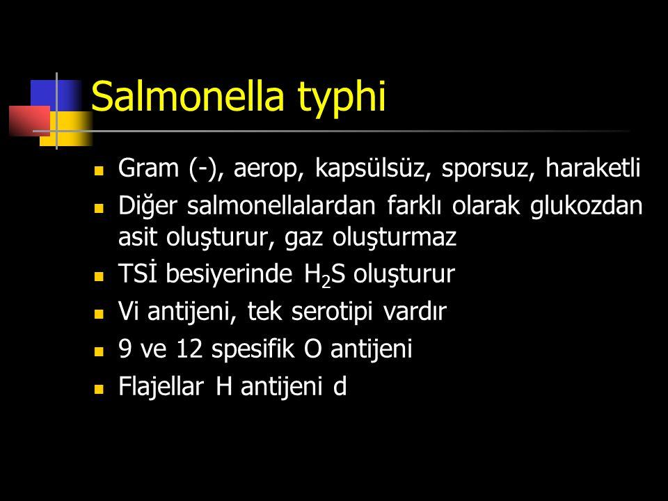 Salmonella typhi Gram (-), aerop, kapsülsüz, sporsuz, haraketli Diğer salmonellalardan farklı olarak glukozdan asit oluşturur, gaz oluşturmaz TSİ besi