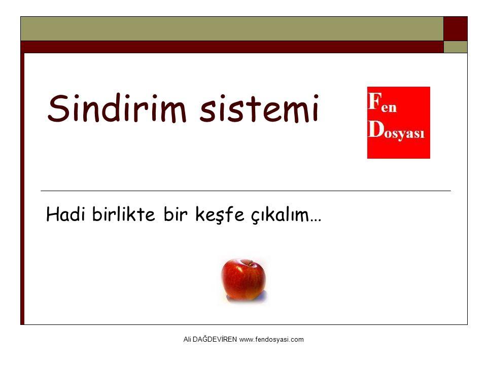 Ali DAĞDEVİREN www.fendosyasi.com Sindirim sistemi Hadi birlikte bir keşfe çıkalım…