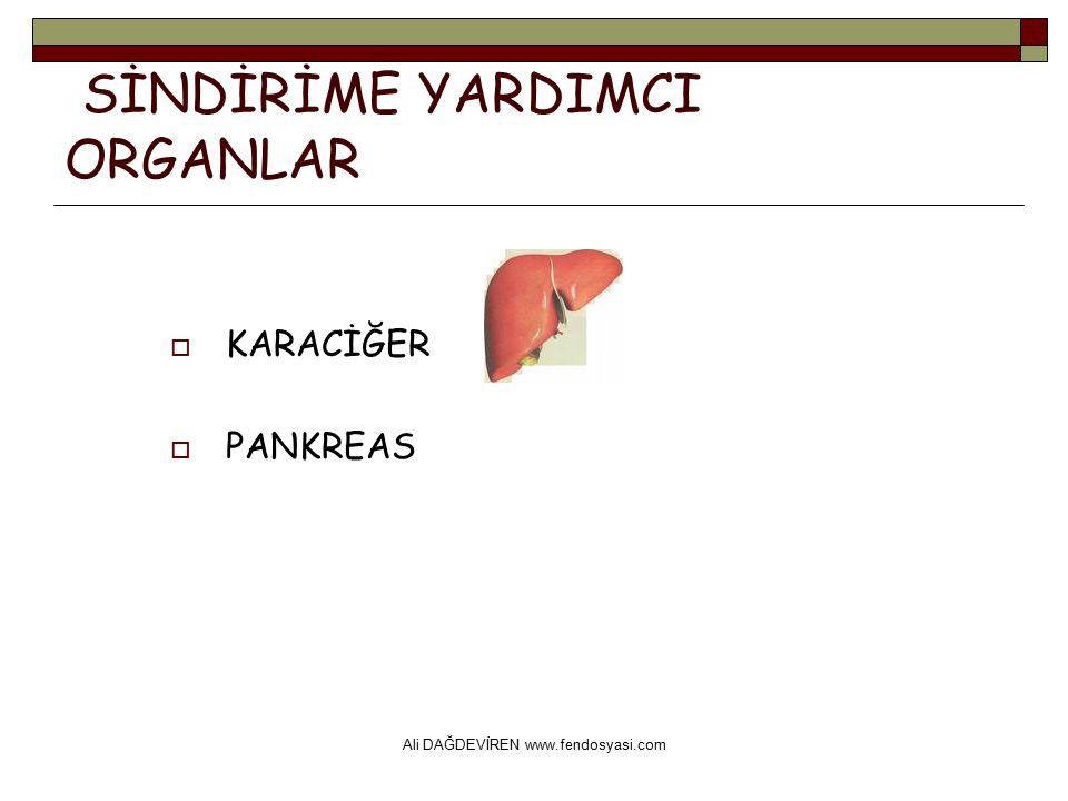 Ali DAĞDEVİREN www.fendosyasi.com SİNDİRİME YARDIMCI ORGANLAR  KARACİĞER  PANKREAS