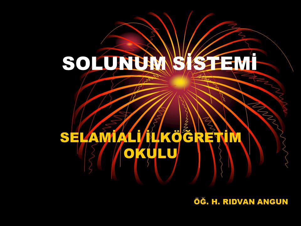 SOLUNUM SİSTEMİ SELAMİALİ İLKÖĞRETİM OKULU ÖĞ. H. RIDVAN ANGUN