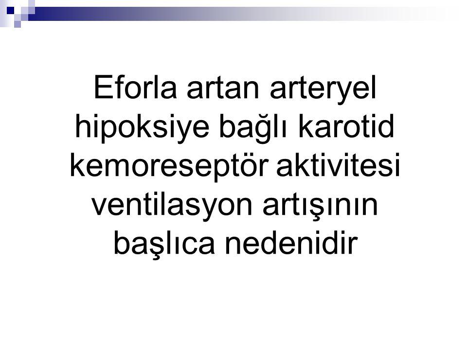Eforla artan arteryel hipoksiye bağlı karotid kemoreseptör aktivitesi ventilasyon artışının başlıca nedenidir