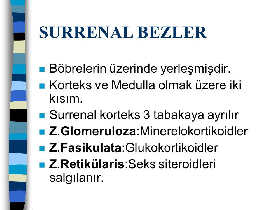 SURRENAL BEZLER n Böbrelerin üzerinde yerleşmişdir. n Korteks ve Medulla olmak üzere iki kısım. n Surrenal korteks 3 tabakaya ayrılır n Z.Glomeruloza: