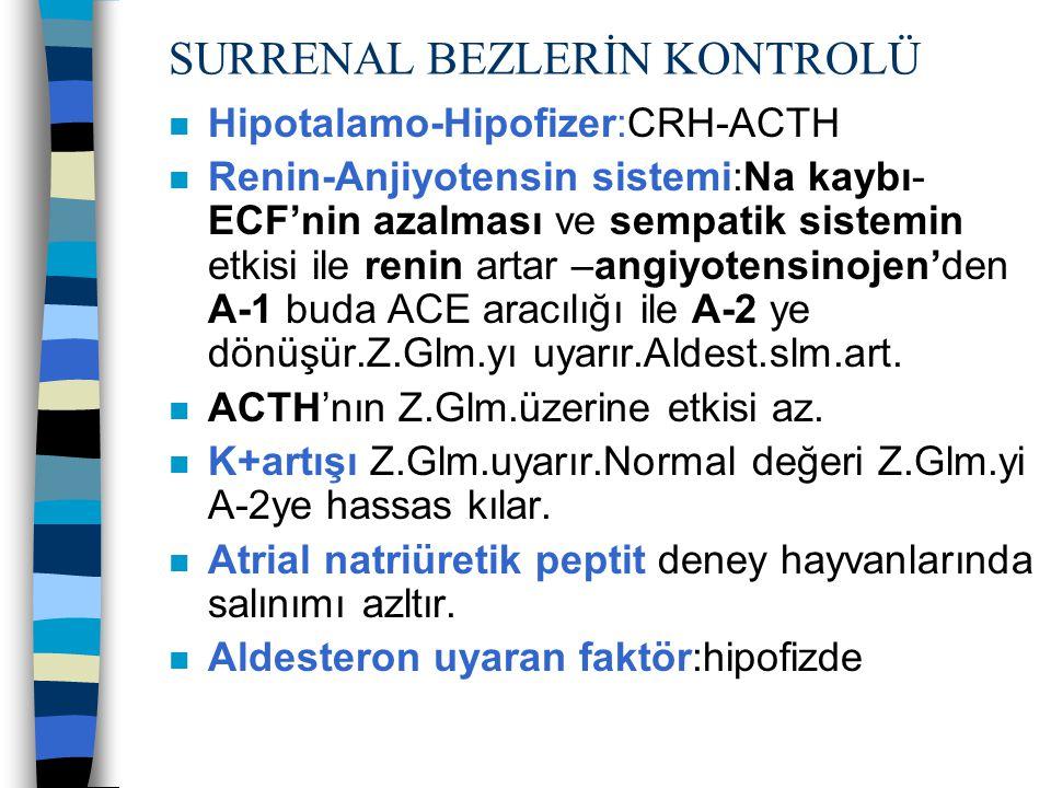 SURRENAL BEZLERİN KONTROLÜ n Hipotalamo-Hipofizer:CRH-ACTH n Renin-Anjiyotensin sistemi:Na kaybı- ECF'nin azalması ve sempatik sistemin etkisi ile ren