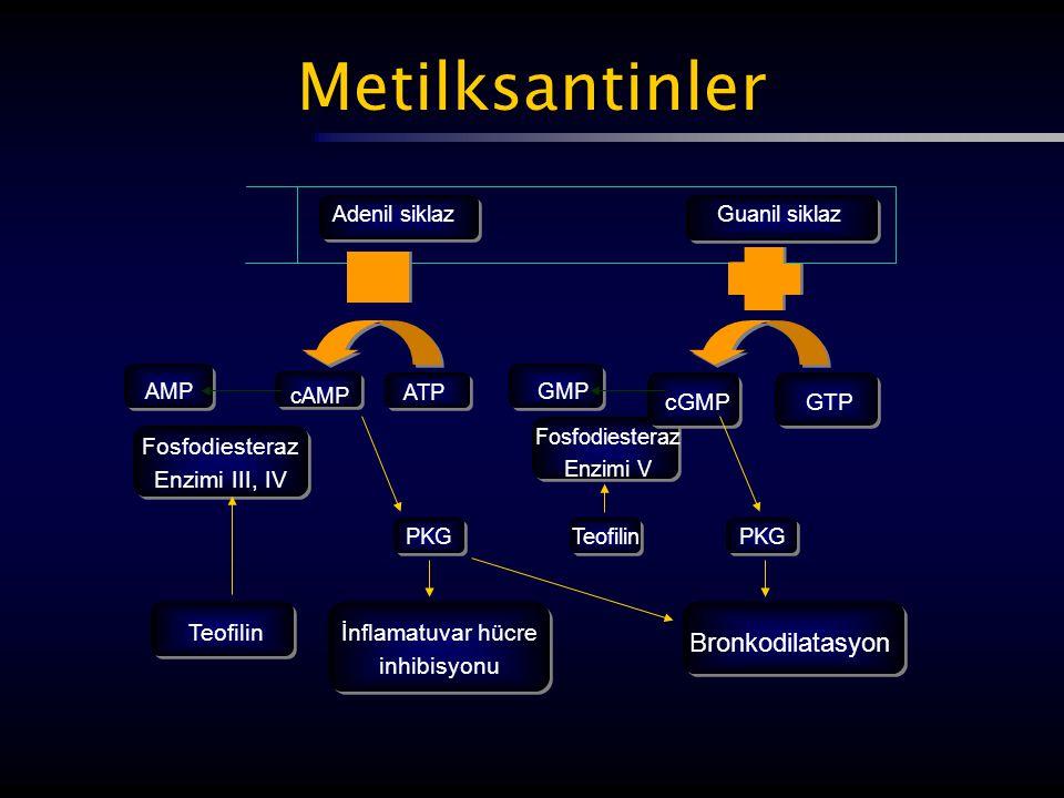 Metilksantinler AMP cAMP ATP GMP cGMPGTP Fosfodiesteraz Enzimi III, IV Fosfodiesteraz Enzimi V PKGTeofilinPKG Teofilinİnflamatuvar hücre inhibisyonu B