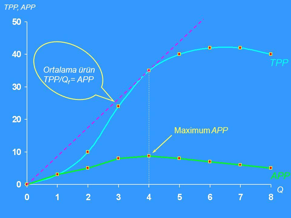 TPP Q APP Maximum APP TPP, APP Ortalama ürün TPP/Q f = APP