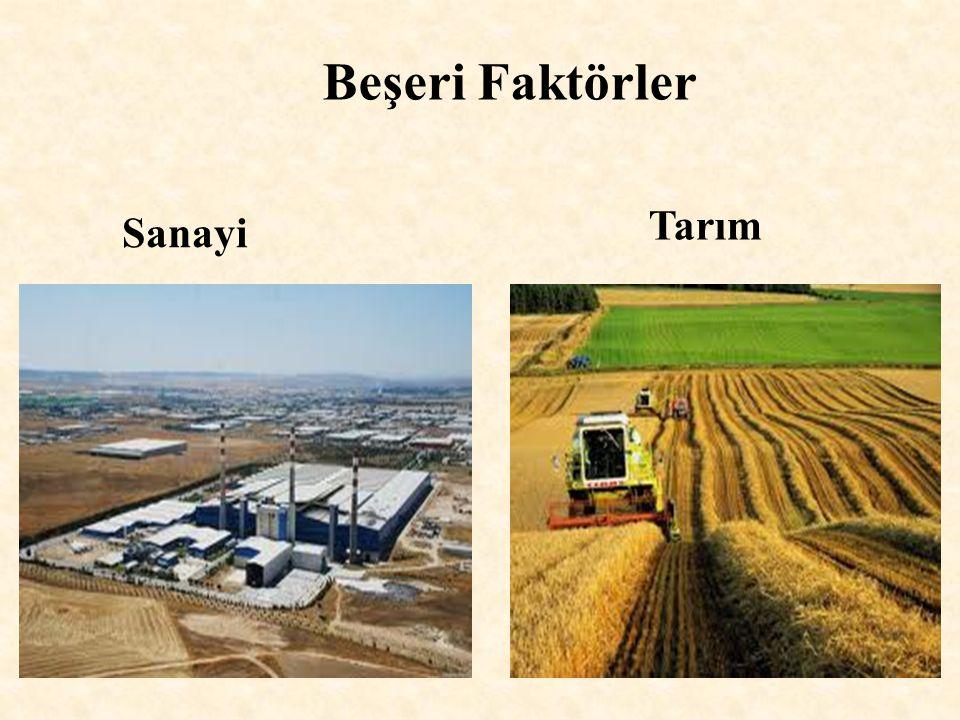 Beşeri Faktörler Sanayi Tarım