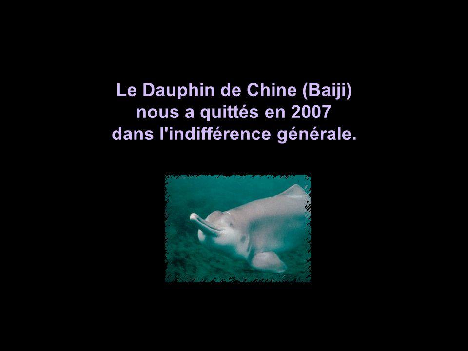 Bunun böyle olaca ğ ını siz de biliyorsunuz La voix des animaux