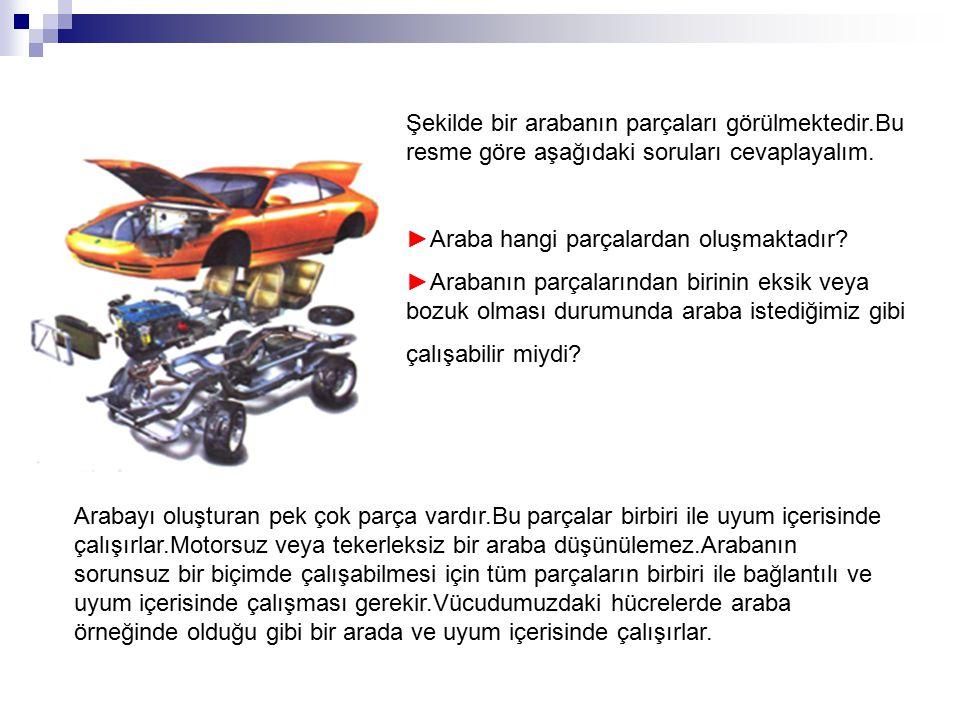 Şekilde bir arabanın parçaları görülmektedir.Bu resme göre aşağıdaki soruları cevaplayalım. ►Araba hangi parçalardan oluşmaktadır? ►Arabanın parçaları