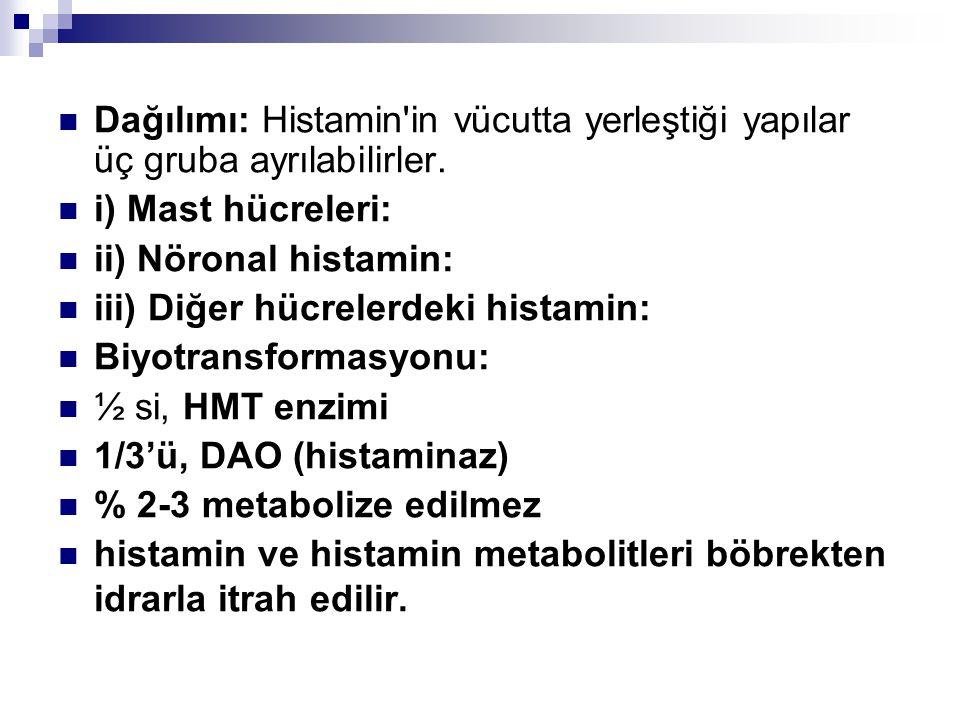 Dağılımı: Histamin'in vücutta yerleştiği yapılar üç gruba ayrılabilirler. i) Mast hücreleri: ii) Nöronal histamin: iii) Diğer hücrelerdeki histamin: B